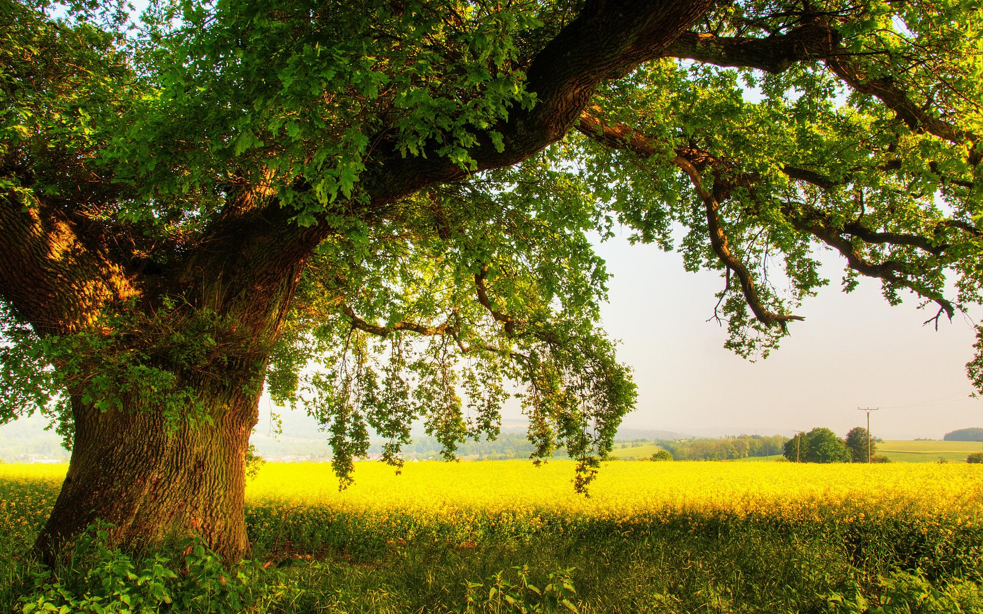 kartinki24_trees_0020